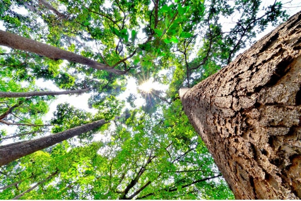 Baumkrone als Vorschaubild Artikel nachhaltige Materialien